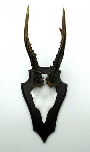 Hörner - Rehbock